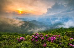 Appalachian Allure - Spring Rhododendron Bloom on the Blue Ridge Parkway, landscape photography by Dave Allen  www.daveallenphotography.com