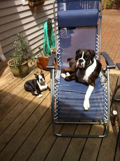 Our canine consultants enjoy some sun!