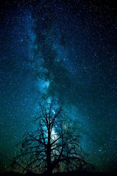 Milky Way Behind The Tree - Night photography in the Eastern Sierras in California is so amazing.  The stars are bright and there are so many places with very little light pollution.