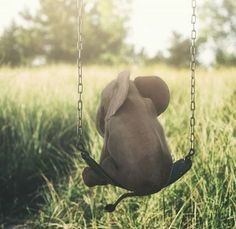 Let your imagination swing 😆 Cute baby elephant 🐘 Photo edited by via Elephants Photos, Save The Elephants, Elephants Playing, Elephant Photography, Animal Photography, Funny Photography, White Photography, Nature Photography, Cute Little Animals