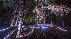 Beepart Festival. Digital Forest installation.