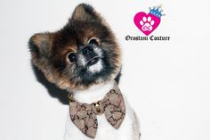 Gucci Monogram Luxury Bowtie Dog Collar from the OrostaniCouture collection.
