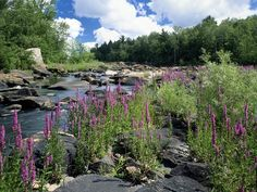ice age trail wisconsin | The Ice Age Scenic Trail near the Chequamegon National Forest post ...