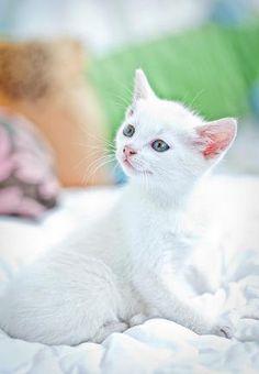 White kitten ??? by Andrea A. Elisabeth