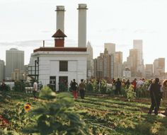 Exploring The Coolest Rooftop Farm In New York City