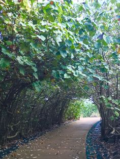 Path to Donkey Beach, Kauai - creepy but beautiful path and when you get to the end an amazing quiet beach!