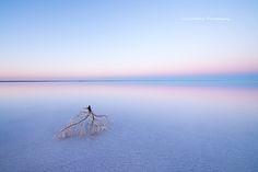 Julie Fletcher Photography: Desolate branch