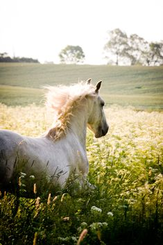 I love horse-riding, I mostly ride horse two times a week. And I have got a little pony were I take care for, twice a week.