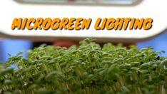Herbs, Lights, Instagram, Herb, Lighting, Rope Lighting, Candles, Lanterns, Lamps