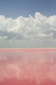 white clouds over a pink field