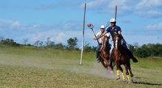 Gathering with all the top Polocrosse players at Antelope Park. A weekend with speed and adrenalin! Lacrosse, Polo, Polos, Polo Shirt