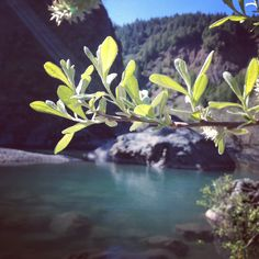 Swimming hole is full : Instagram @gabriellawotherspoon // #gabriellawotherspoon #instagram #river #nature #trees #sun #sunlight