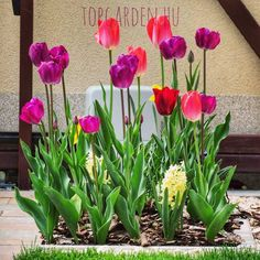 Garden Facebook Sign Up, Garden, Plants, Garten, Lawn And Garden, Gardens, Plant, Gardening, Outdoor