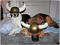 Viikinkiravintola Harald Vikings, Restaurant, Dogs, Animals, The Vikings, Animales, Animaux, Diner Restaurant, Pet Dogs