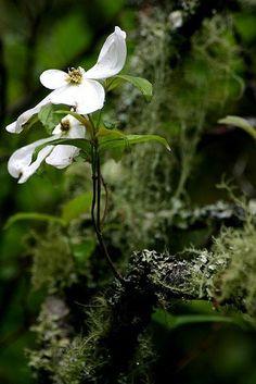 Fleur sur la Mousse