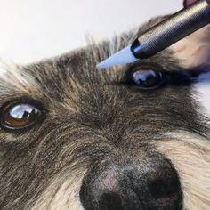 Pastel Drawing, Pastel Art, Painting & Drawing, Painting Fur, Realistic Animal Drawings, Pencil Drawings Of Animals, Colored Pencil Artwork, Color Pencil Art, Colored Pencils