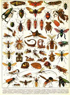 notwiselybuttoowell:  encyclopédie larousse, 1898