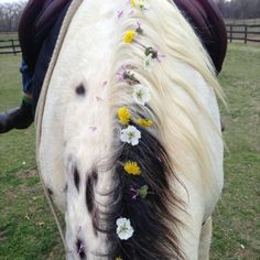 Spring flowers in horse's mane all it take's is a horse some hair clips and flowers