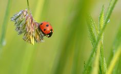- Dewy Ladybug - by ~UNexperienced