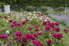 carolyne-roehm-at-home-in-the-garden-book-peonies-habituallychic-006