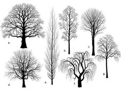 Figure 10. Silhouettes of trees with a wide range of branch angles and apical dominance.