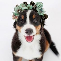 Happy Friday! Here is a #flowerdog to brighten your day! Love this!  #flowerfriday #dogsinweddings #dogsofinstagram #flowercrown #flowersinhair #flowerhair #flowerheadband #flowerhalo #weddinginspiration #weddingflowers #weddingideas #weddingblog #weddingblogger #londonblog #londonblogger #devinebride photo @ladycatthedog