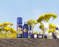 Beauty: L'OCCITANE en Provence Facial Creams - GF Luxury