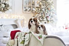 How to photograph your dogs, or any pet. Tips and tricks for the holidays with more on the blog