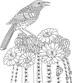 Cactus Wren and Saguaro blossom Arizona state bird and flower Coloring page