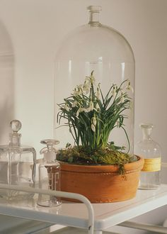 Scoop up an already-sprouted spring bulb like snowdrops and plant it in a glass container for a touch spring. -CountryHome
