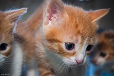 Koke Kitty I love kittens! More pics like this on the website. Click the link