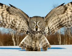 Wow! I love owls, they have the most striking eyes.
