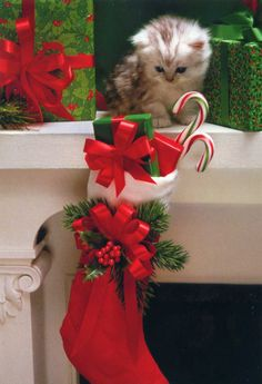 Christmas Kitten tempted to open the presents in her Christmas Stocking Cute Cats And Kittens, I Love Cats, Kittens Cutest, Christmas Kitten, Christmas Animals, Hallmark Christmas, Merry Christmas, Christmas Stocking, Christmas Colors