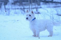 Duffy, the Vigilant, in January.