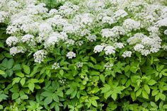 Some plants cause skin irritation when touched. Poison ivy may come to mind, but there are at least three dozen plants that can cause rashes or irritation. Skin Rash, Tzatziki, Herbs, Canning, Plants, Skin Irritation, Gardening, Compost
