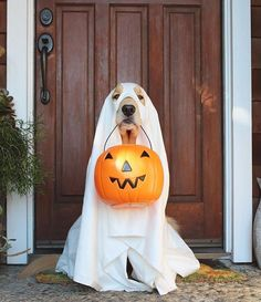 Watch these adorable puppies enjoying changing of seasons and their favorite holiday--HALLOWEEN! Does your dog love Halloween as much as these cute pups? Dog Halloween Costumes, Dog Costumes, Halloween Kostüm, Baby Animals, Funny Animals, Cute Animals, I Love Dogs, Cute Dogs, Adorable Puppies