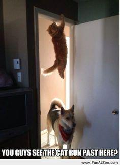 Ninja cat is hiding - Funny Picture