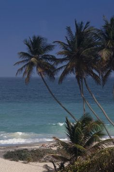 """Drank coconut rum here ~ Palm Trees extend over the famed """"Bottom bay"""" beach in Barbados, West Indies"""