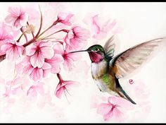 Watercolor Hummingbird and Cherry Blossom II Painting Demonstration - YouTube