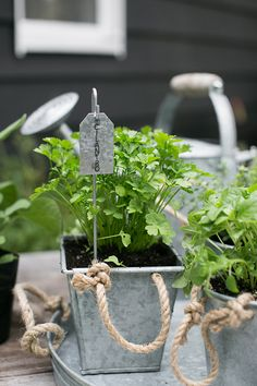 cilantro planted in rope planter from target with stake and label on outdoor patio / sfgirlbybay