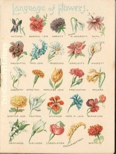 victorian+meaning+of+flowers+chart%2B.jpeg (470×626)