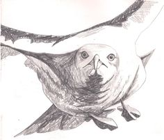 drawings of seagulls - Google Search