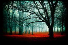 Entrar en fotos de niebla  fotografía de cuento de hadas