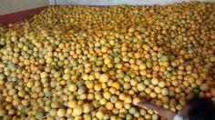 #fruits #wholesale