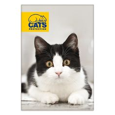Cats Protection Magnet - Black and White Cat