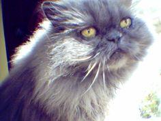My Kitty Matisse.  1994-2005