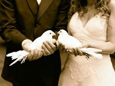 doves: totally doing this at my wedding ladies for all my sigkap sisters :)