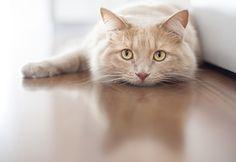 Doit-on faire dégriffer son chat? #animal #animaux #chat