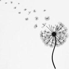 dandelion drawing - Google Search