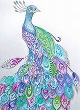 peacock drawing - Yahoo Image Search Results